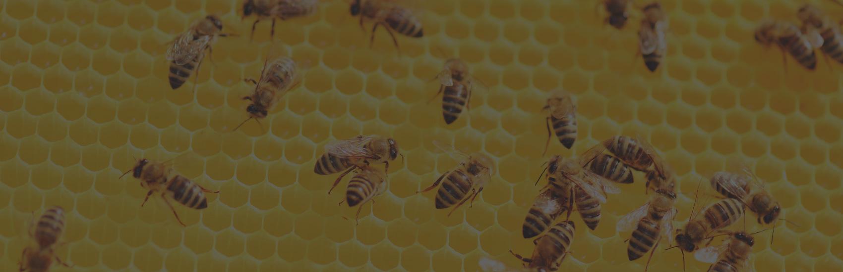 Miel Nature : Une entreprise familiale implantée dans son milieu
