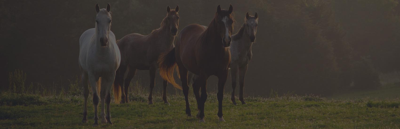Vaudreuil-Soulanges in horseball mode