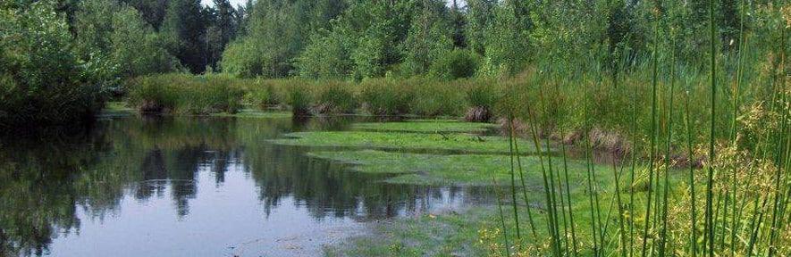 La population de Vaudreuil-Soulanges consultée sur les milieux humides et hydriques